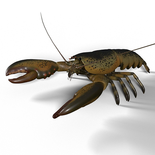 lobster 3d model max obj mtl fbx blend 1