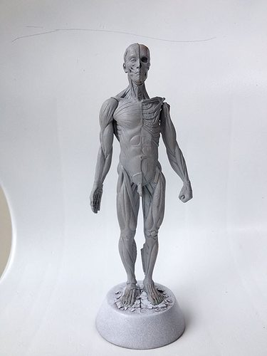 anatomy man 3d model stl 1