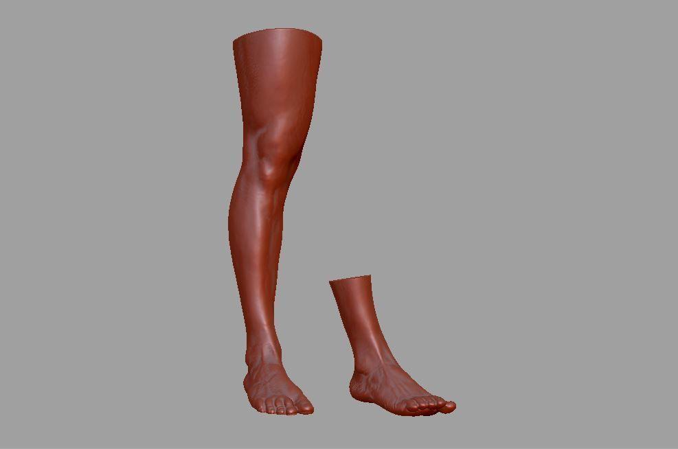 Human leg and foot