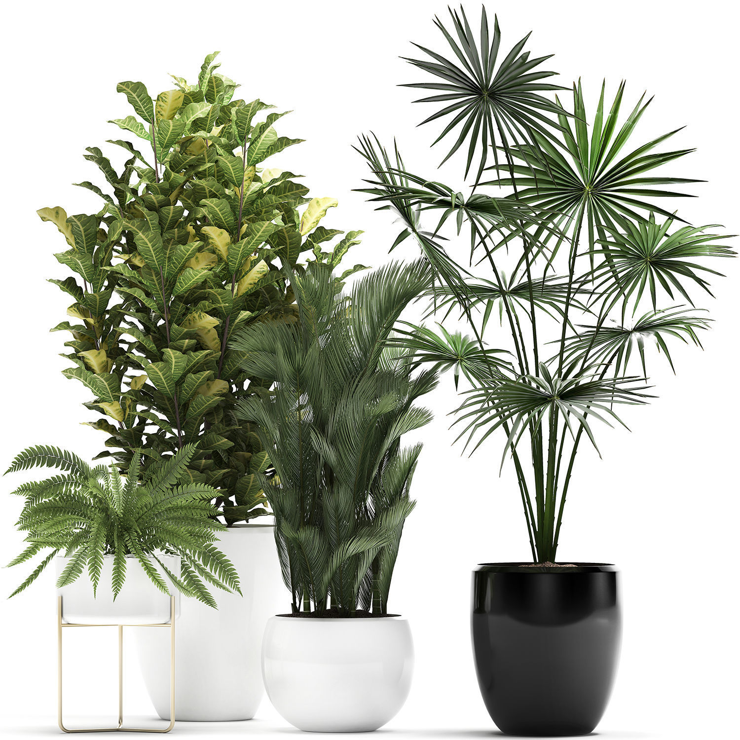 Collection Of Decorative Plants Trees In Pots For Home 3d