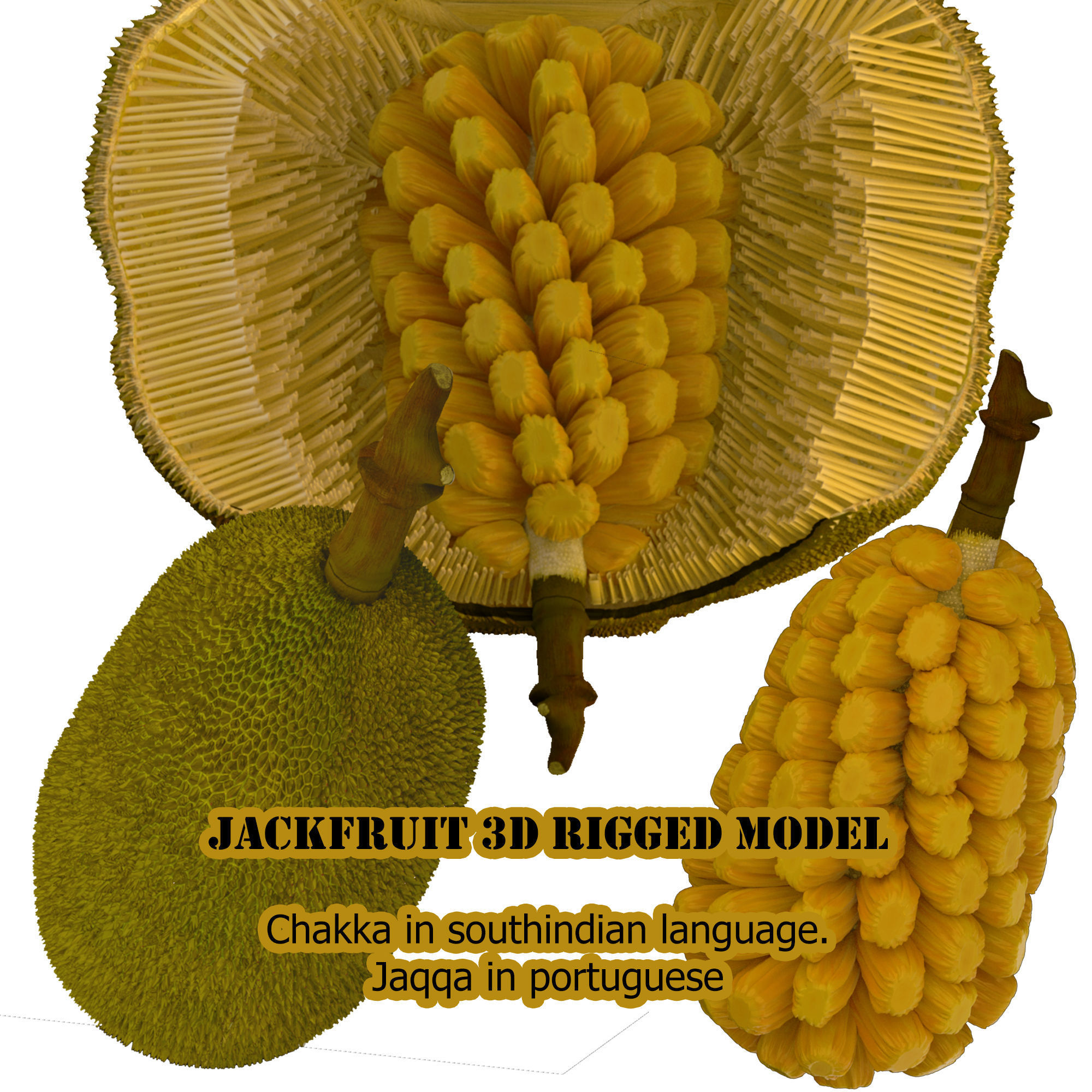 jackfruit 3D rigged model