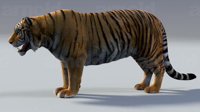 tiger maya 3d model rigged ma mb tga mel 1