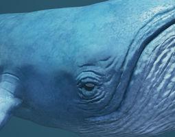 blue whale 3d model low-poly rigged animated obj 3ds fbx blend uasset