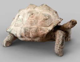 game-ready 3d asset turtle