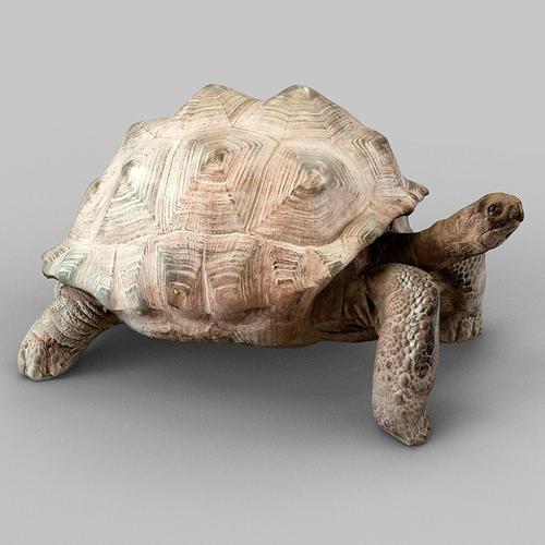turtle 3d model obj mtl 1