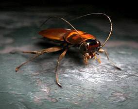 3D model Cockroach