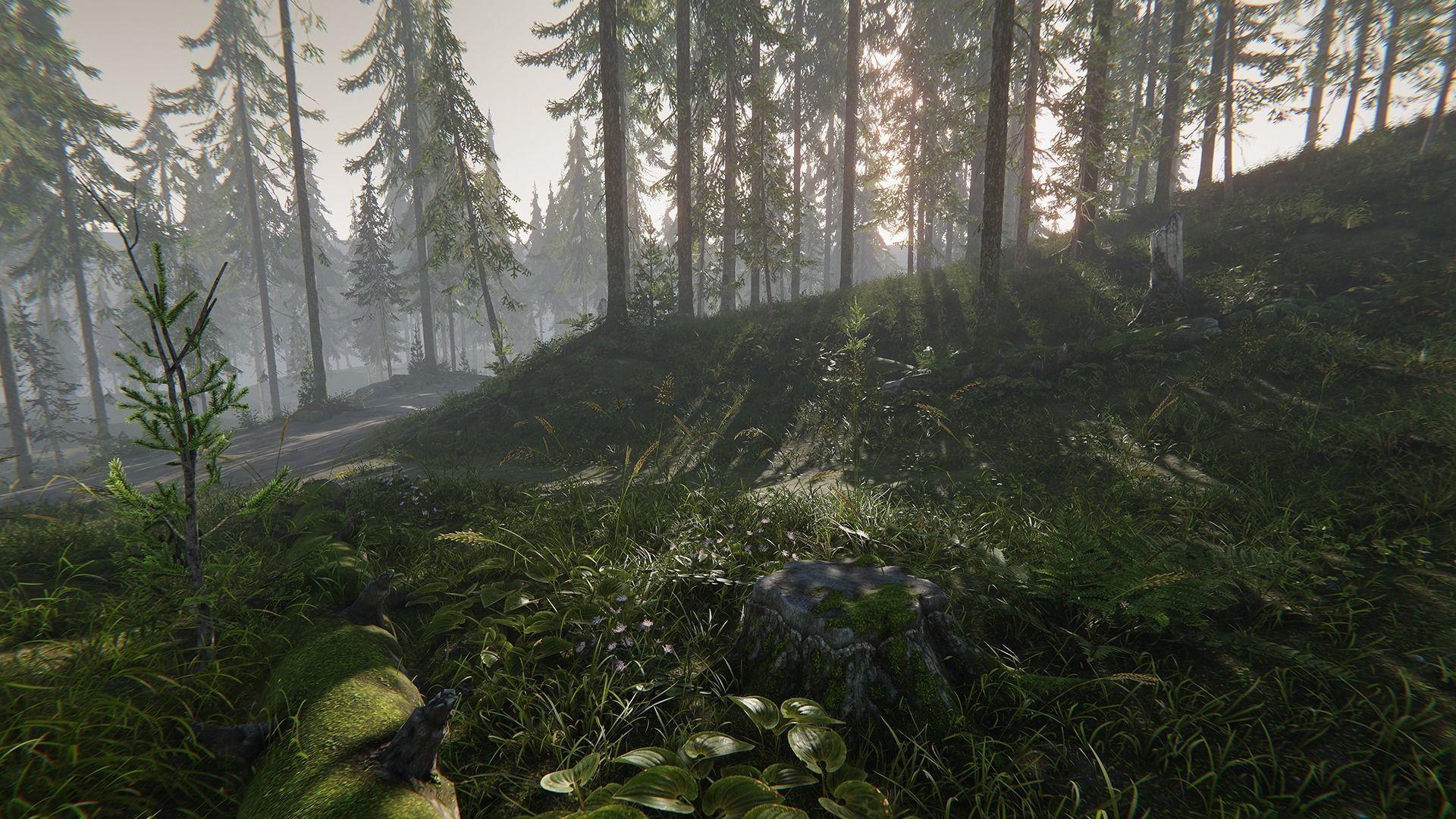 Hazy Hills - Conifer Forest Environment