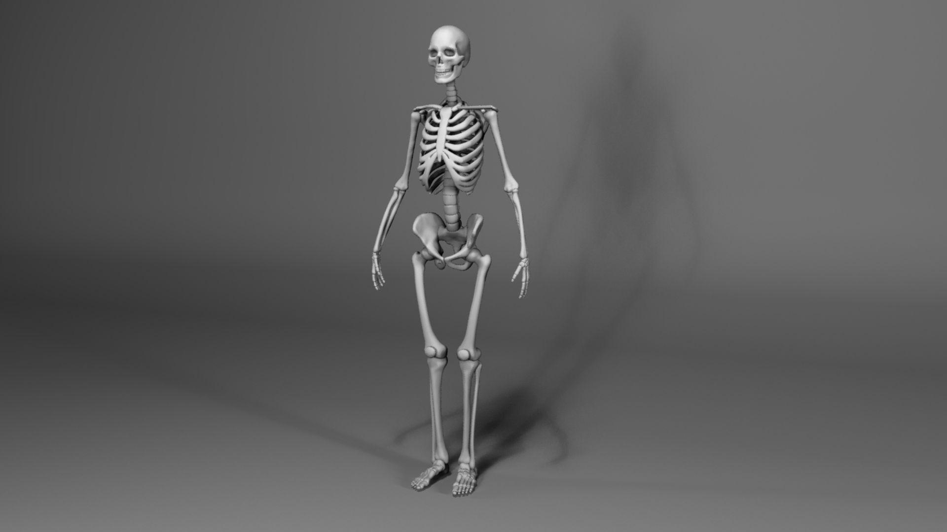 human skeleton free 3d model obj, Skeleton