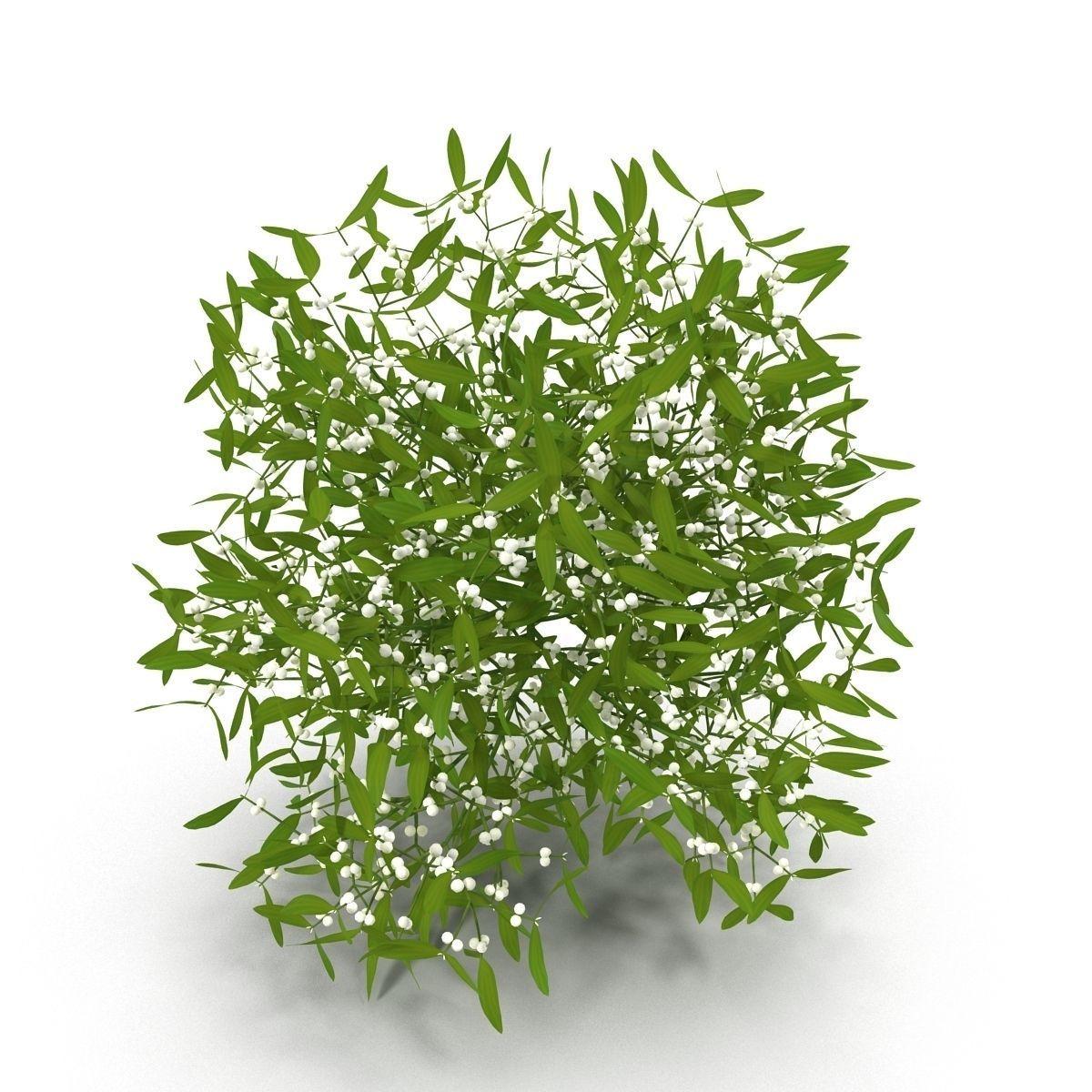 3d mistletoe cgtrader