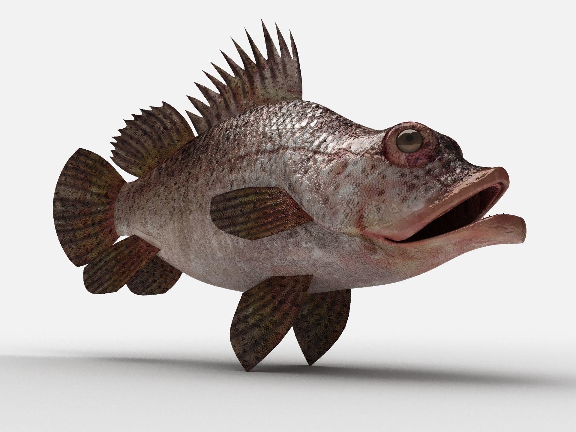 Scorpion fish Scorpen-2
