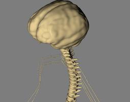 nervous system basic max 2011 3d model max obj 3ds fbx