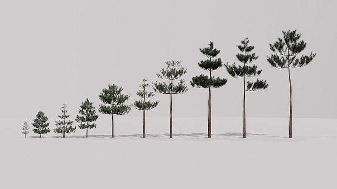 Game Ready Low Poly Pine Tree Collection
