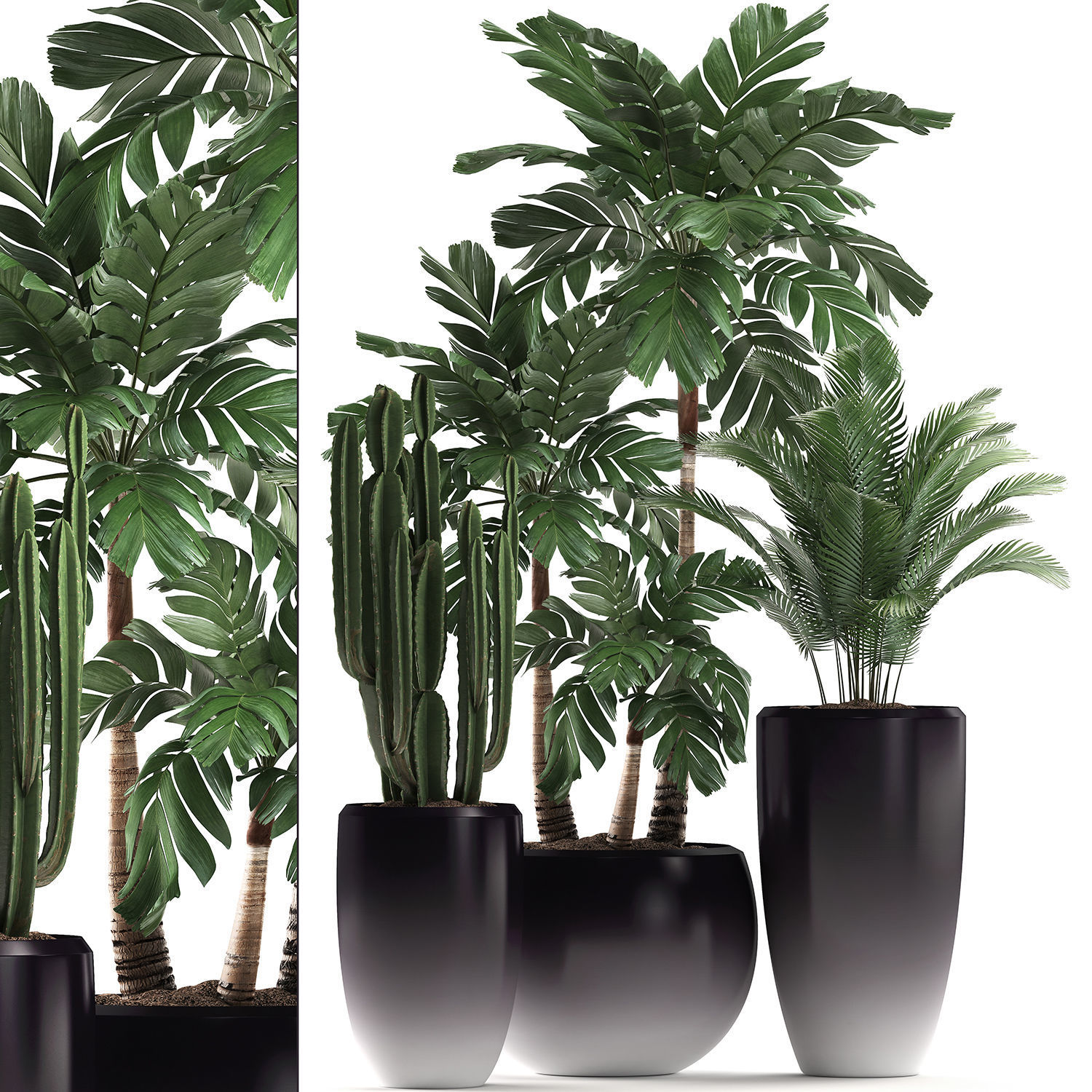 Decorative plants in flower pots for the interior 470A