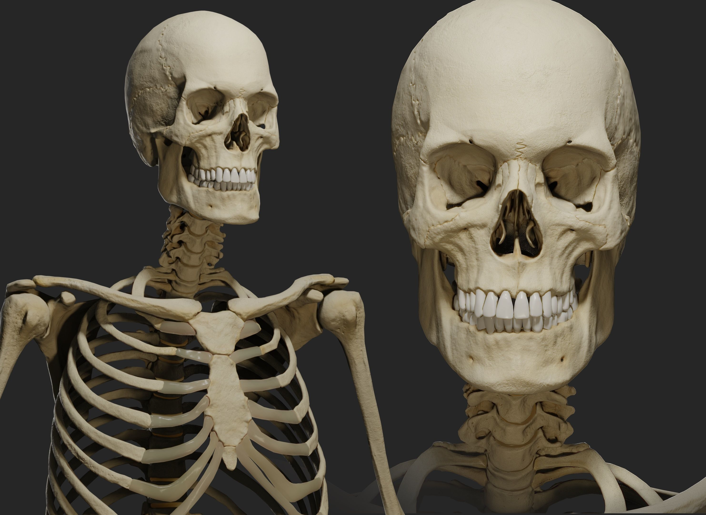 Human male skeleton PBR