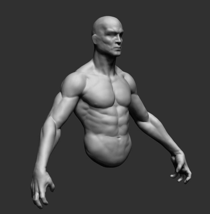 Male Upper Body 3D Model in Anatomy 3DExport