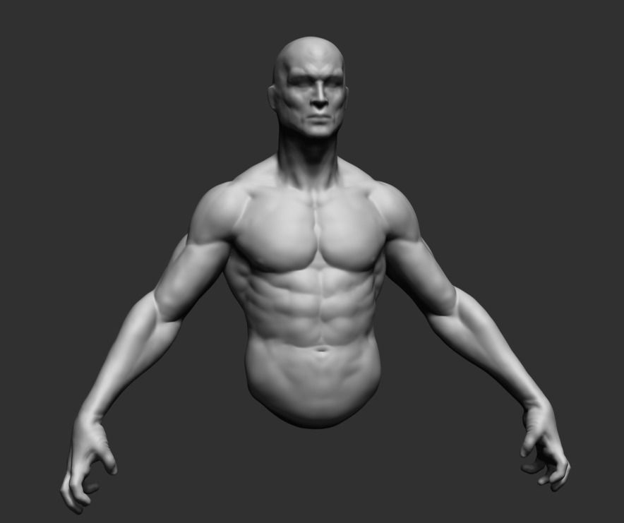 male upper body 02 3d model obj ztl | cgtrader, Muscles