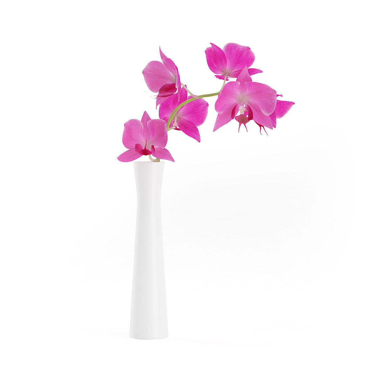 3d Orchid Flower In White Vase Cgtrader
