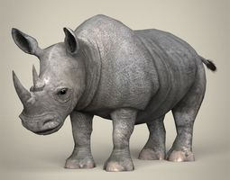 3D model Low Poly Realistic Rhinoceros