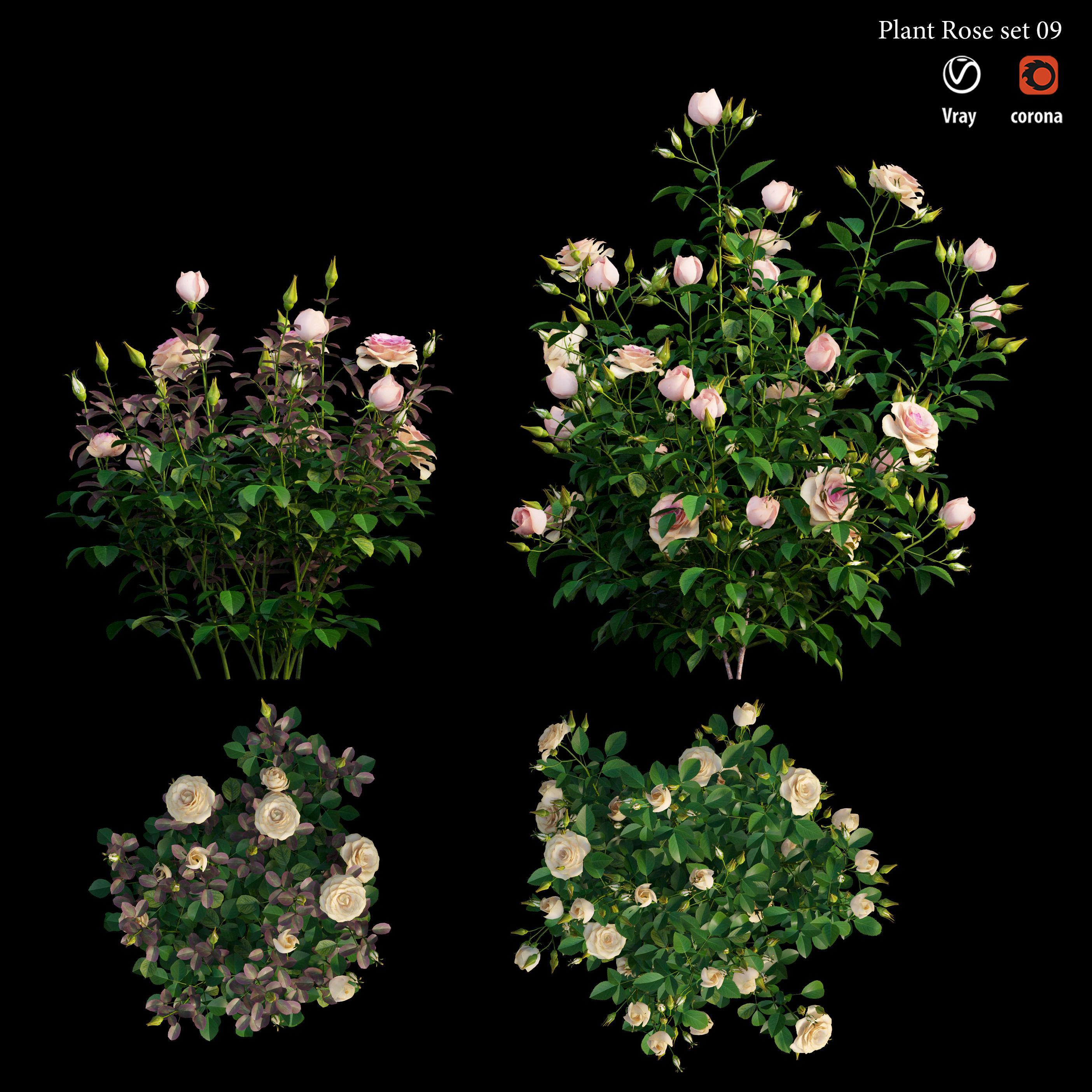 Plant rose set 09