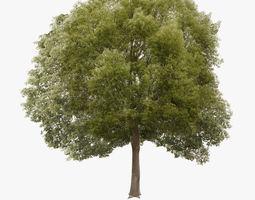 3D model realtime Hackberry Tree Lowpoly