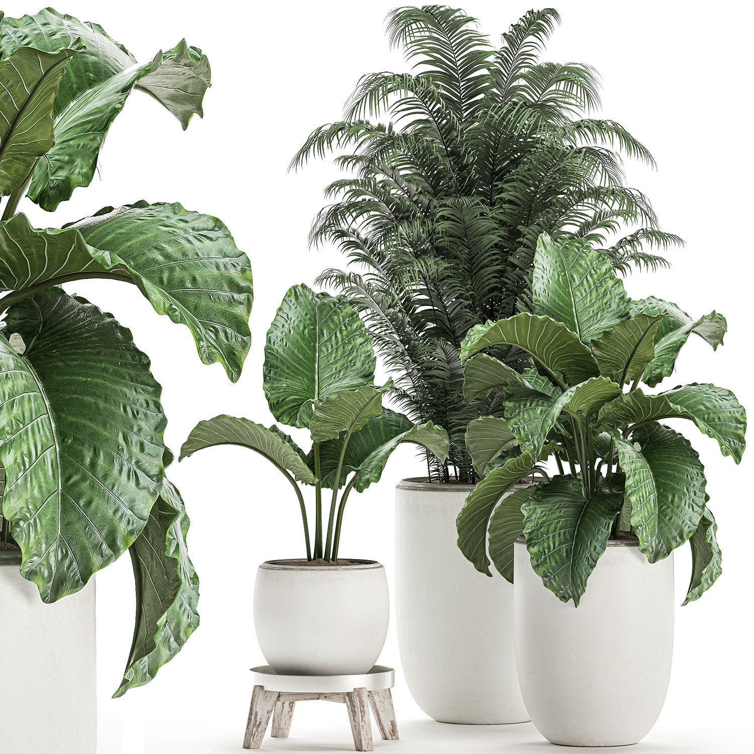Plants in a white flowerpot for decor and interior design 504