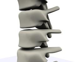 3D model Spine MAX 2010