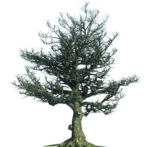 Tree Oak Tim Berton Sleepy Hollow 3d Model Max Obj Fbx Stl