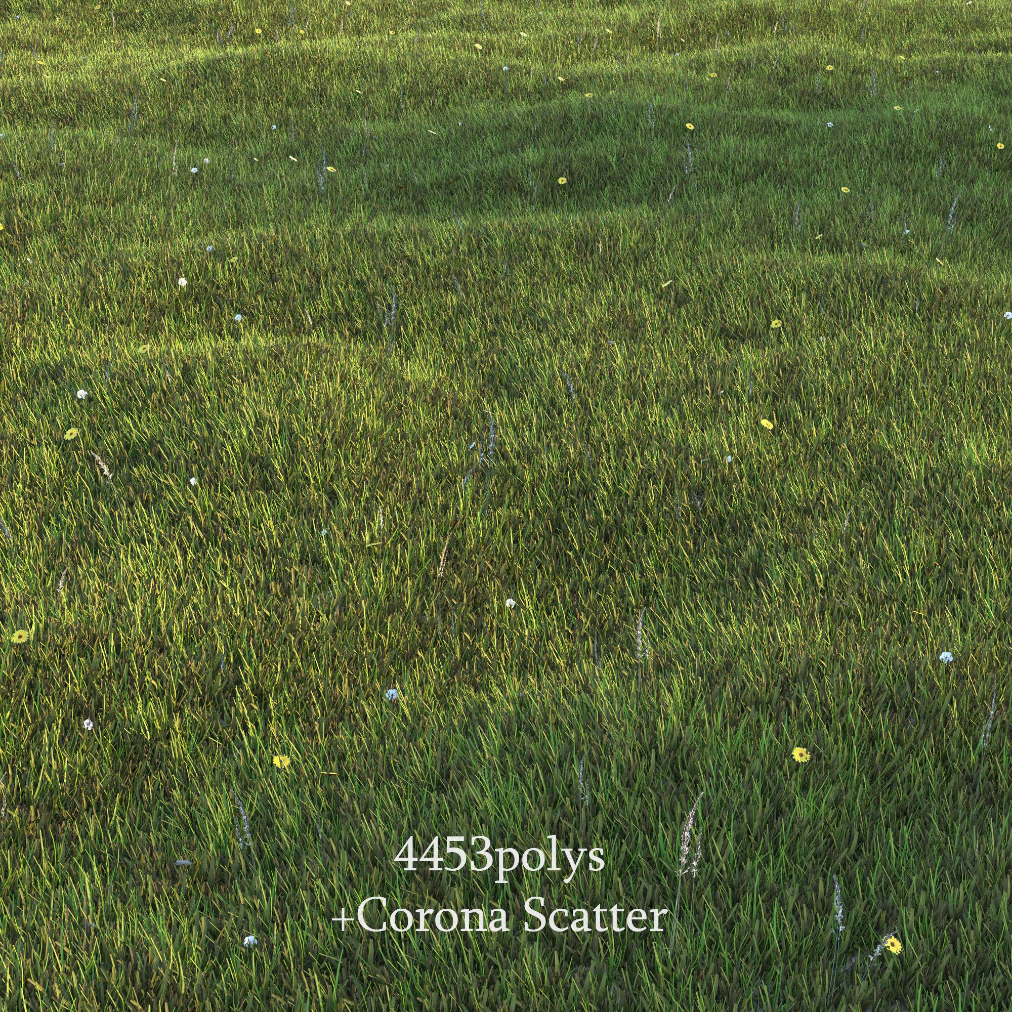 Lawn Grass