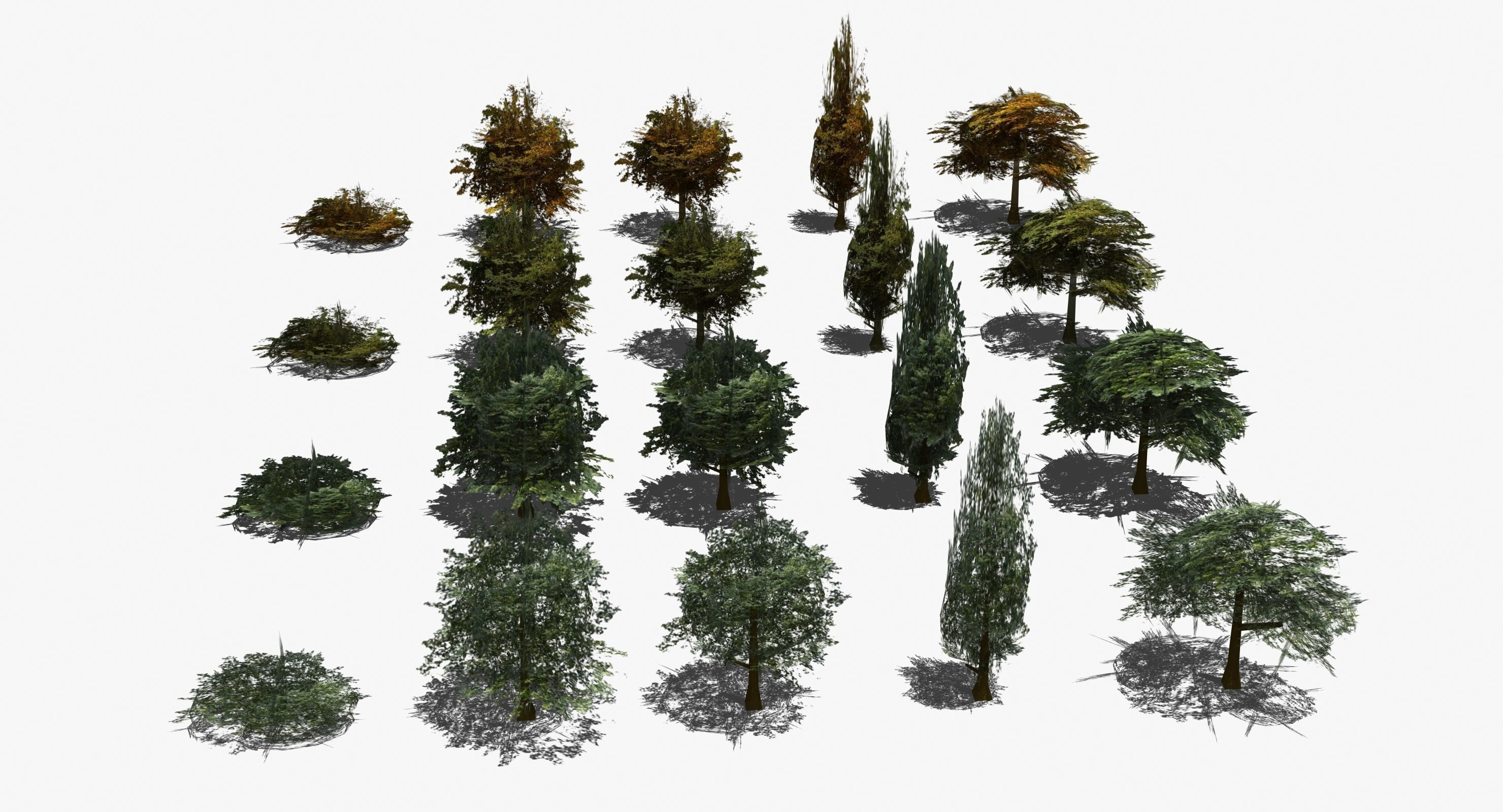 Real Time Trees