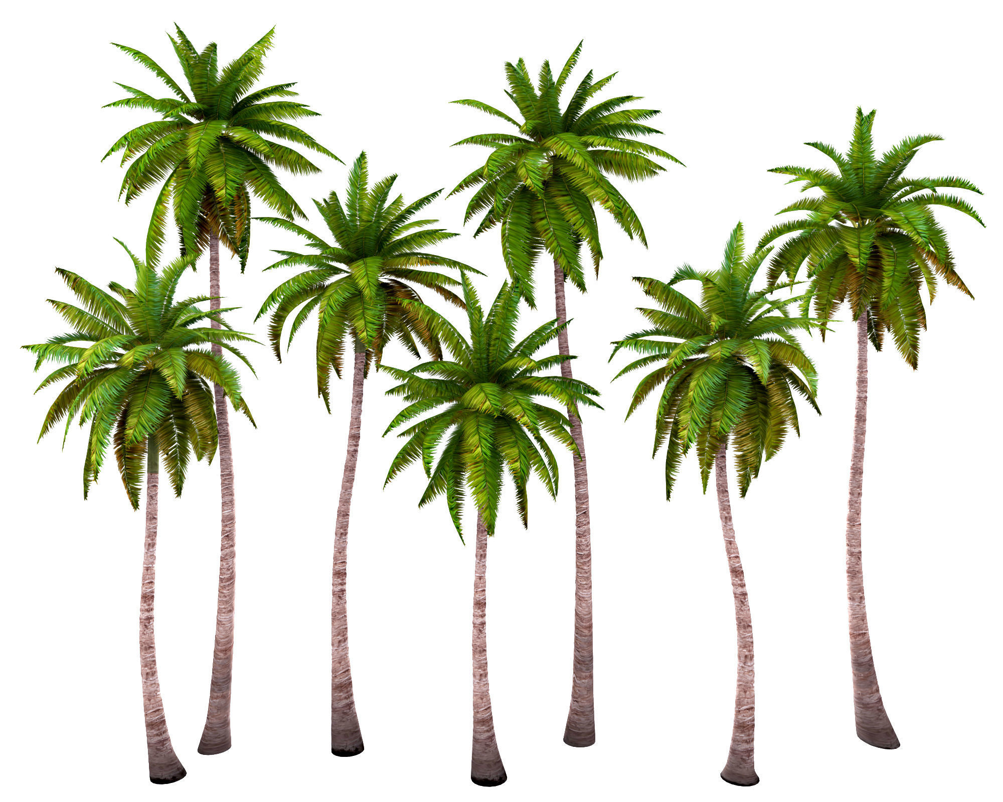 Palms low poly set 1