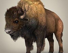 Low Poly Realistic Montana Buffalo 3D model
