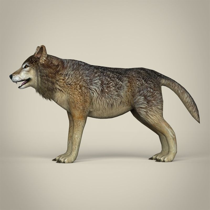 3D Model Low Poly Realistic Wolf VR / AR / Low-poly MAX