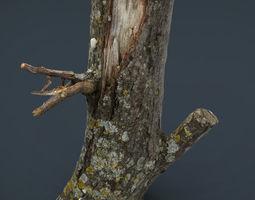 Wood Log 3 3D asset