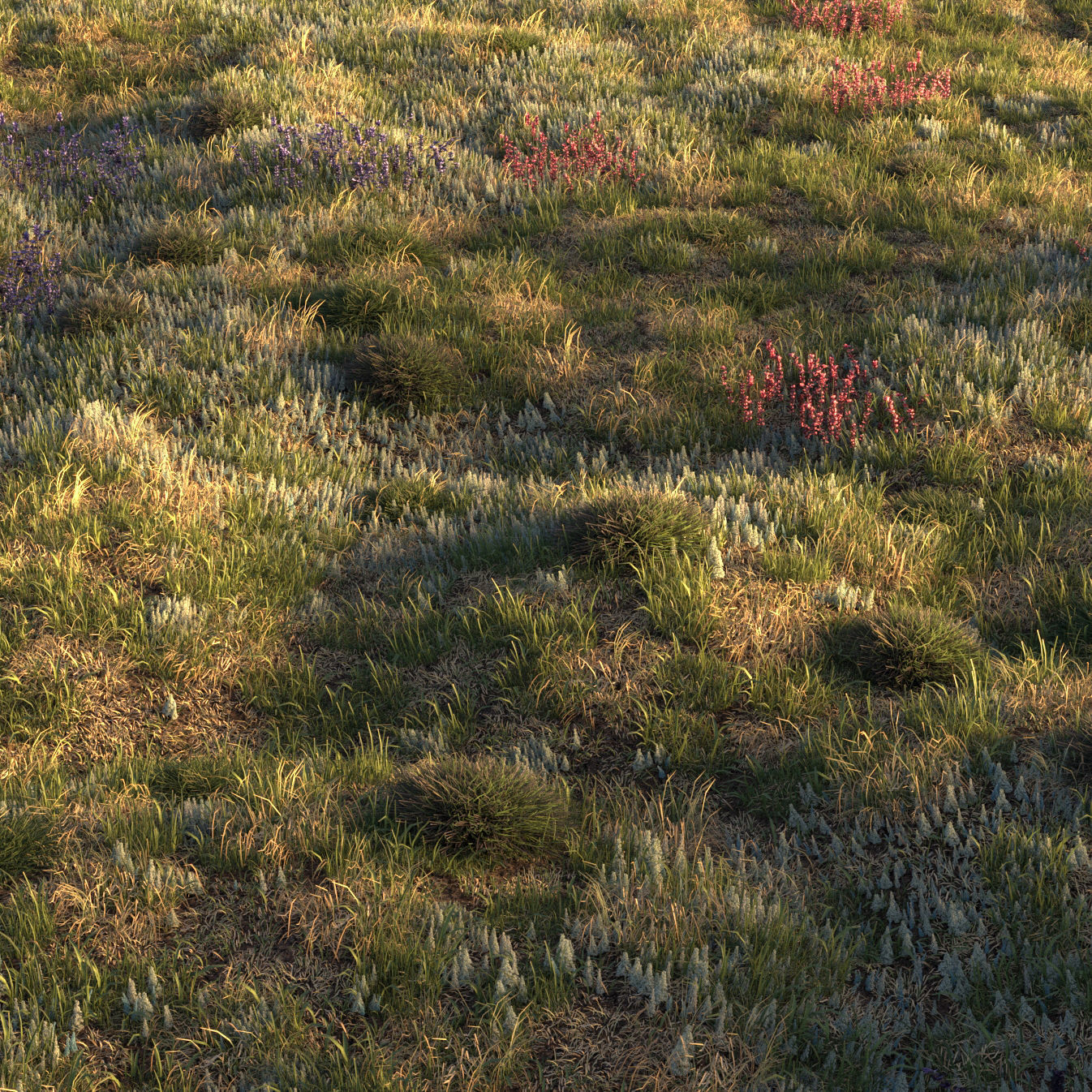 Field grass and corona scatter