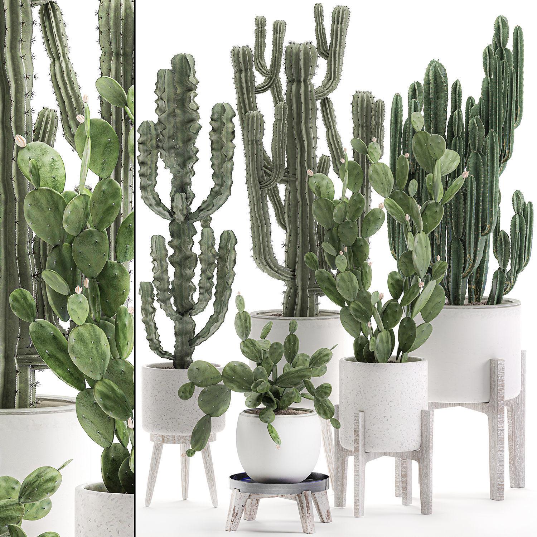 Decorative cactus in white pots for the interior 571