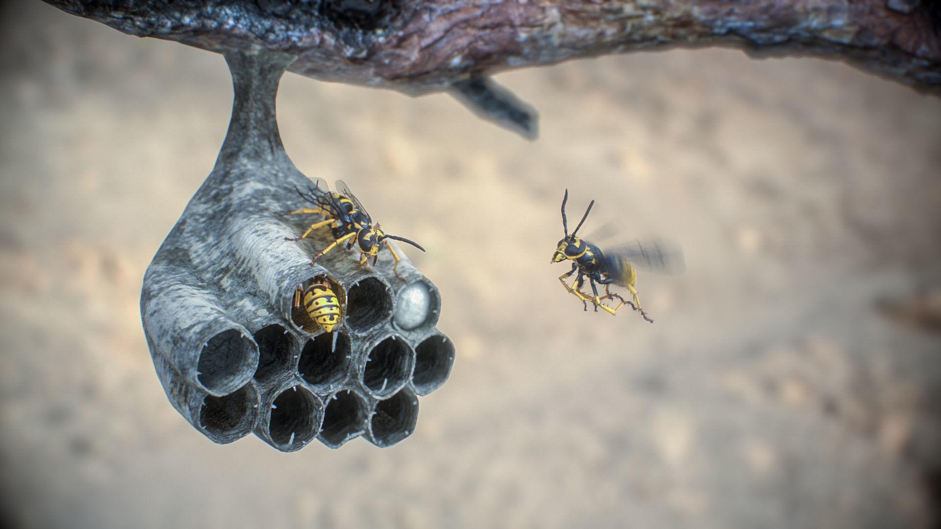 Nest wasps