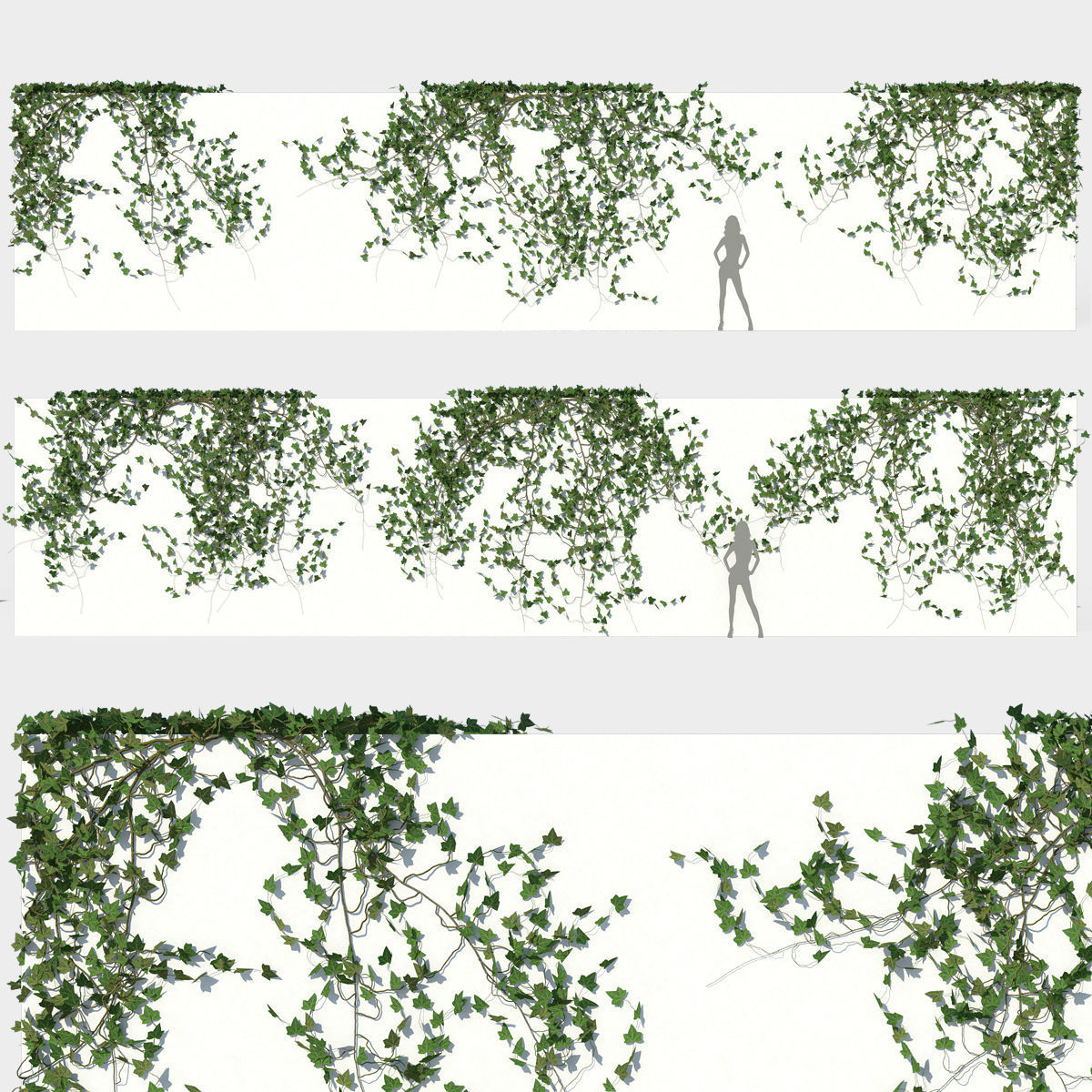 Ivy Wall 03