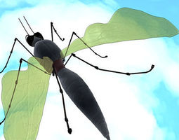 3D model mosquito cartoon 01