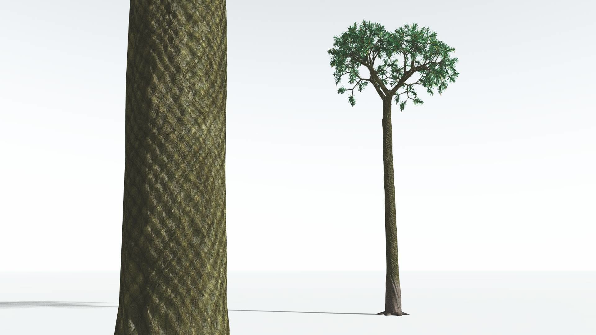 EVERYPlant Spiny Scale Tree 01 --15 Models--