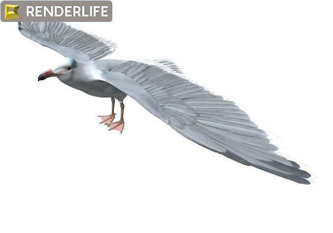 seagull 3d model max obj mtl fbx c4d ma mb 1