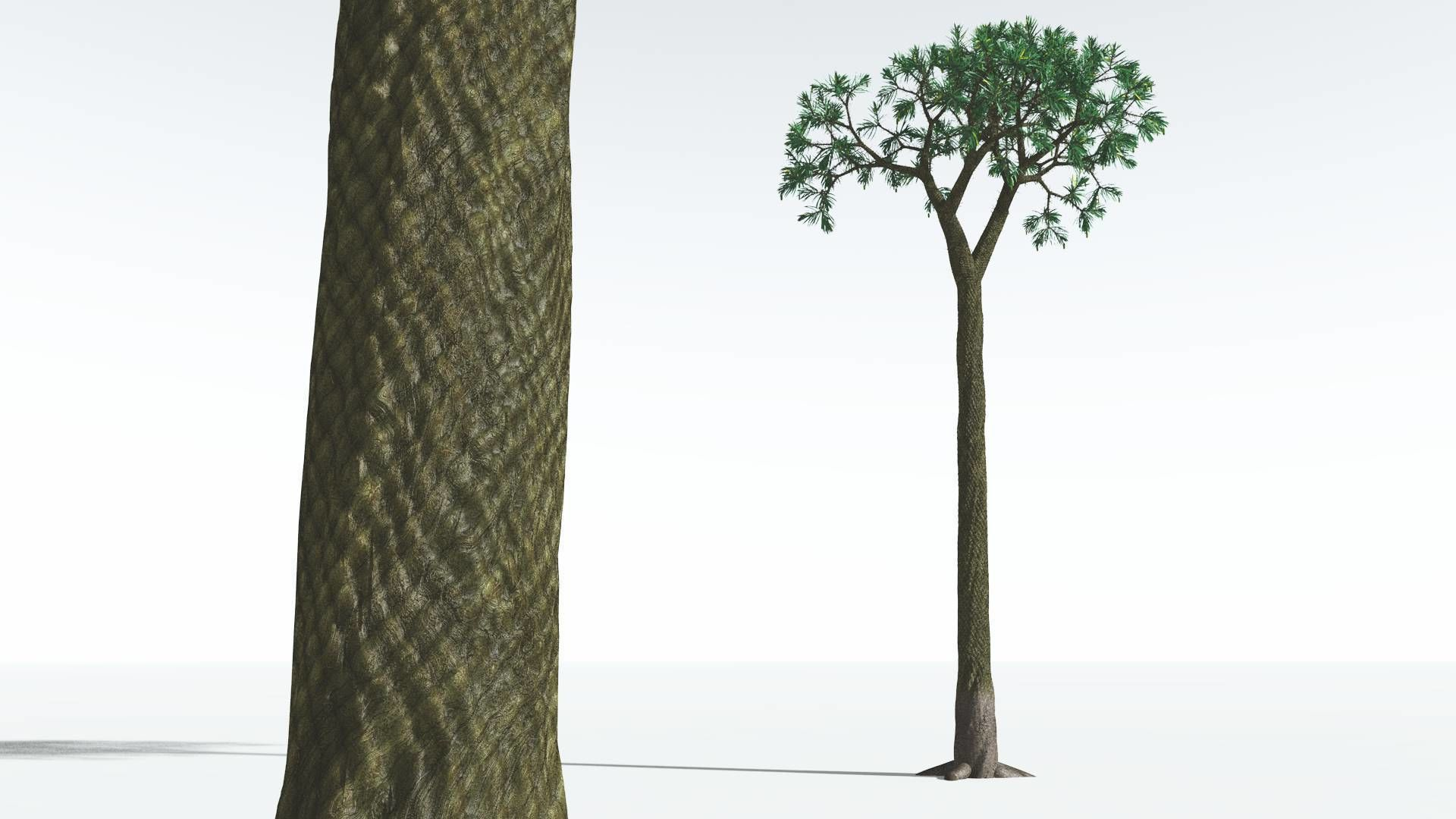 EVERYPlant Spiny Scale Tree 03 --15 Models--