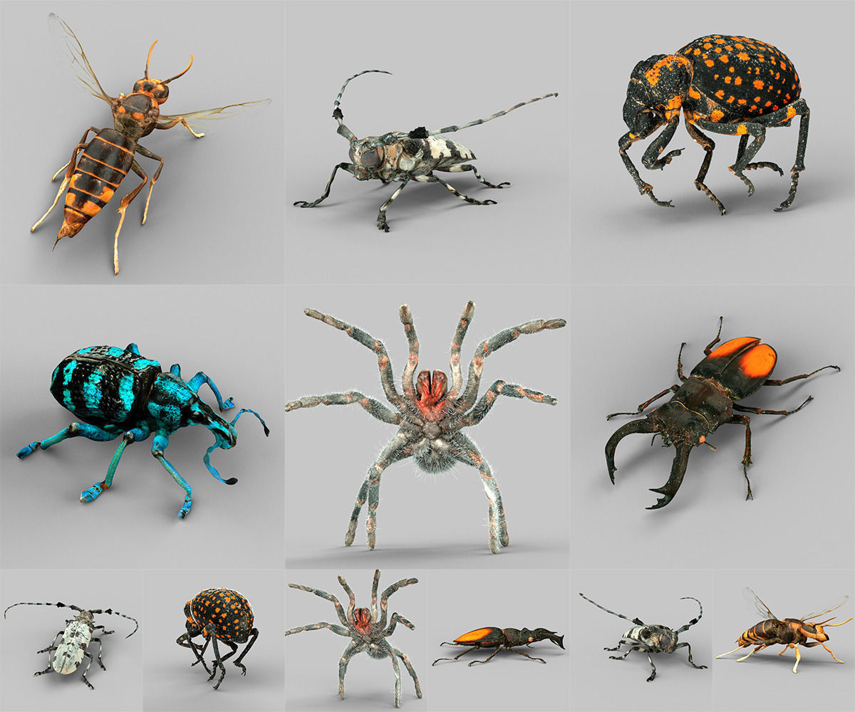 Insect Collection Vol 1