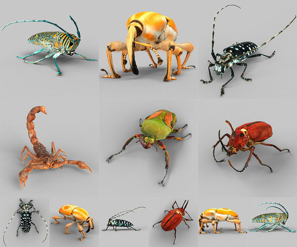 insect collection vol 2 3d model low-poly obj stl 1