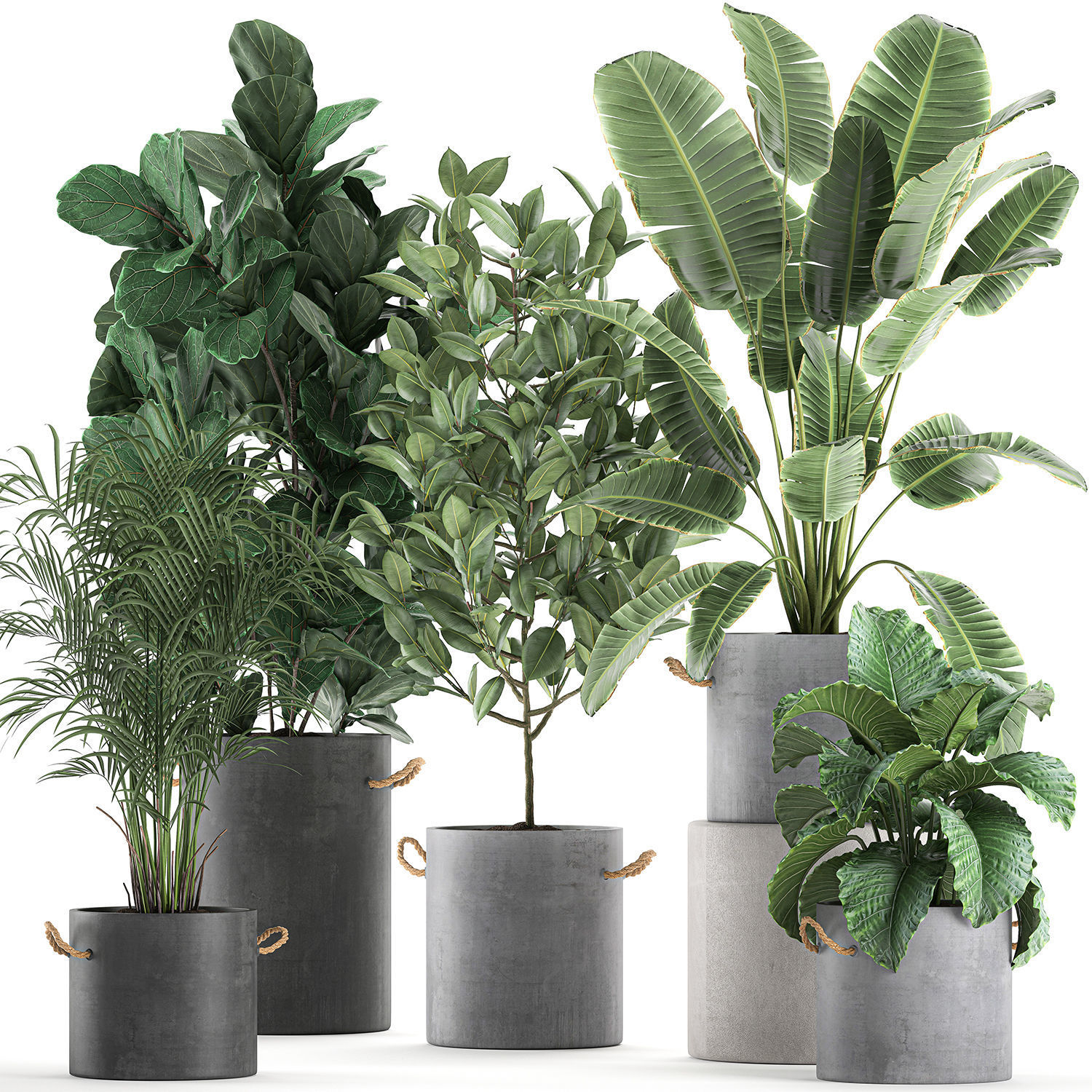 Decorative plants for the interior in flowerpots 613