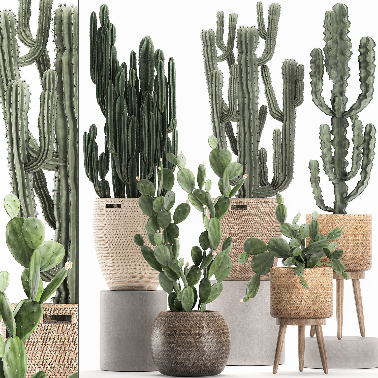Decorative cactus in baskets for the interior 617