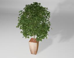 3d model plant ahorn tree