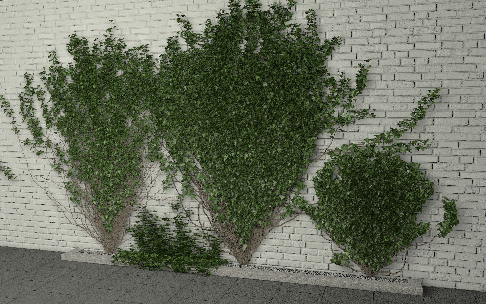 ivy wall 3D Model C4D | CGTrader.com
