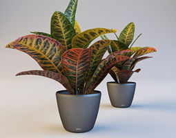 3D Croton in pot