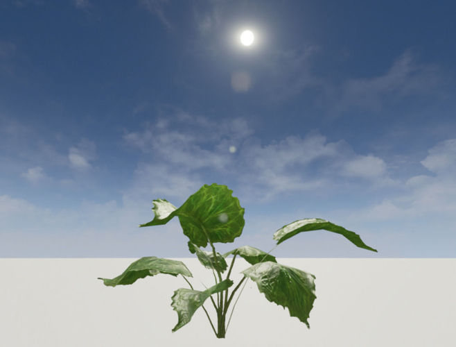 tropical big leafed plant - low polly 3d model obj fbx blend 1