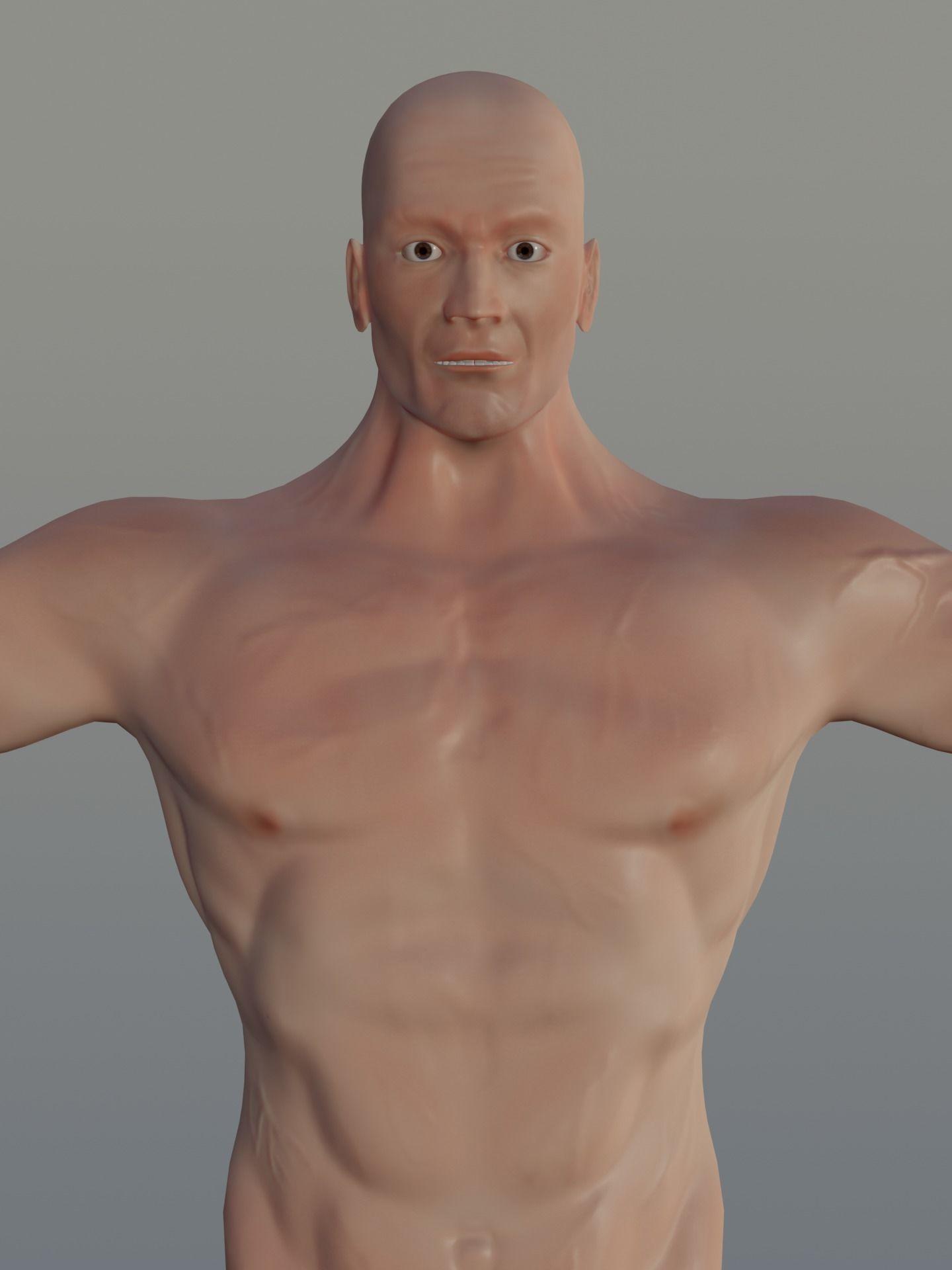Human Basic Model - Muscular